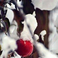 Зимняя красота :: Олеся
