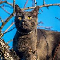 Ох уж эти мартовские коты... :: Роман Воронежский