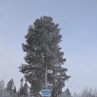 Северная зима :: Anastasia Kuznetsova