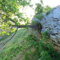 И из камня может вырасти дерево :: Светлана Казмина