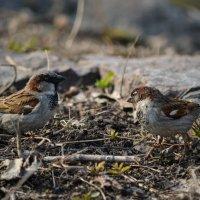 Кстати о птичках :: Анастасия Михалева