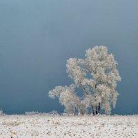 зима :: Дмитрий Брошко