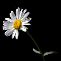 просто цветок... :: Александр ***