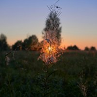 Вечереет, солнце село,вот и лето пролетело. :: NSS