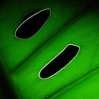 лист зеленый :: Дмитрий