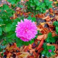 Осенний цветок :: Дмитрий