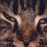 Эти глаза! :: Евгения Сенченко