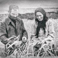 Дедушка с бабушкой в поле :: Наталья Ильина