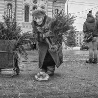 Купите ёлку :: Владимир Голиков