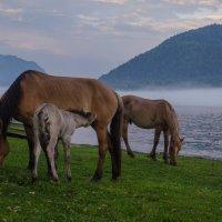 Лошади на закате :: юлия Алексенко