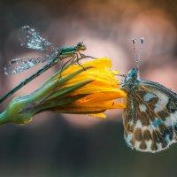 Утро на цветочке :: Роман Зайцев