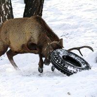 Не превращайте лес помойку! :: Сергей Черных