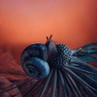 Щупальца / tentacles :: Наталья Голубева