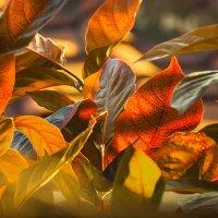 Просто листья :: Aleksandr Romanov ROALAN