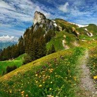 путешествие по летним Альпам :: Elena Wymann