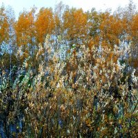 Ранней осенью у реки :: Светлана Дунаева