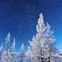 Звездное небо :: Александр Велигура