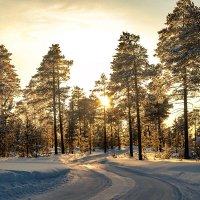 Зимняя дорога :: The photo