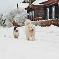Охрана деревни :: Юрий Пучков