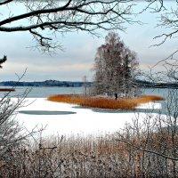 Декабрь на озере Сапшо. :: Ольга Митрофанова