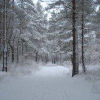 А снег идёт,а снег идёт...После бурана. :: Павел
