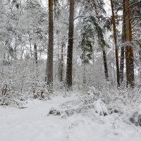 Зимняя Сказка... :: Дмитрий Петренко