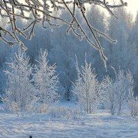 Был сильный мороз :: Larisa Simonenkova