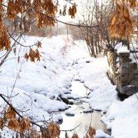 Зимние зарисовки :: Ксения