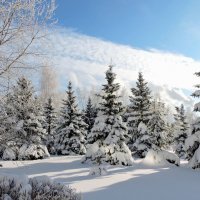 Мороз и солнце- день чудесный :: Ната Волга
