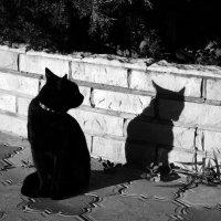 """""""Разговор с тенью"""". :: сергей лебедев"""