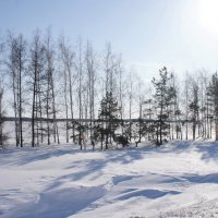 Тени на снегу. :: сергей