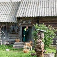 Идём по грибы! :: Владимир Миронов