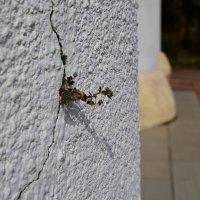 Линия жизни.. :: Taina Fainberg