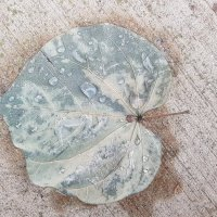 Осенний лист после дождя :: Ольга Долбилина