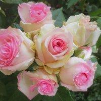 """Розовый """"букетик"""" :: Эля Юрасова"""