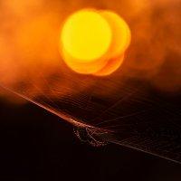 Солнце в сетях :: Олег Пученков