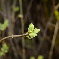 Весна...ее ждут... :: Алёна