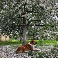 Собака под деревом :: Ульяна Гончарова