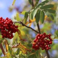 Краски Осени :: Алёна Писарева