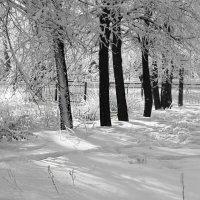 Черно-белая зима :: Елена Осетрова