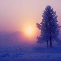 """""""Сиреневый туман....."""" :: Константин Есипов"""