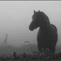 Возникая из тумана :: Василий Хорошев