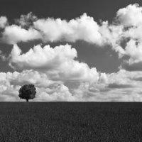 В гордом одинночестве :: Сергей Матях