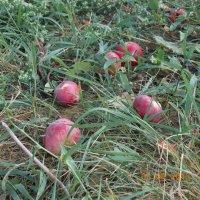 наливное яблочко :: Татьяна