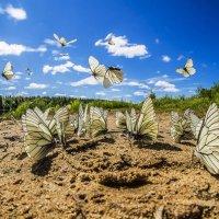 Бабочки и лето на реке! :: Соня Орешковая (Евгения Муравская)