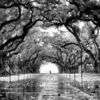 Oak Alley Plantation :: Roman Mordashev