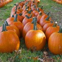 Осенний парад... :: Мил@ *