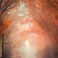 Осенний туман :: Илья Молоков