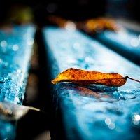 В старом парке поселилась осень... :: Мила Солнечная