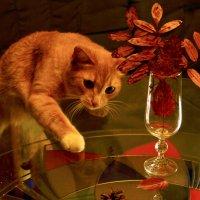 Осень рыжими котами землю щедро одарила... :: Ольга Логачева